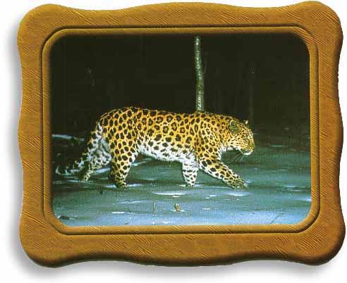 Лео с Земли Леопардов